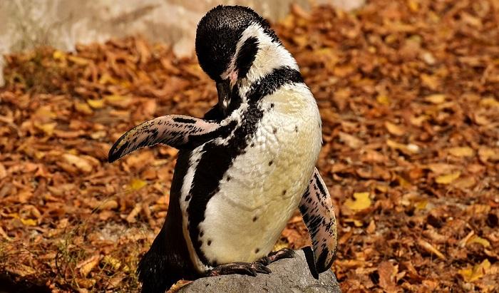 Mơ thấy chim cánh cụt đánh con gì trúng lớn?