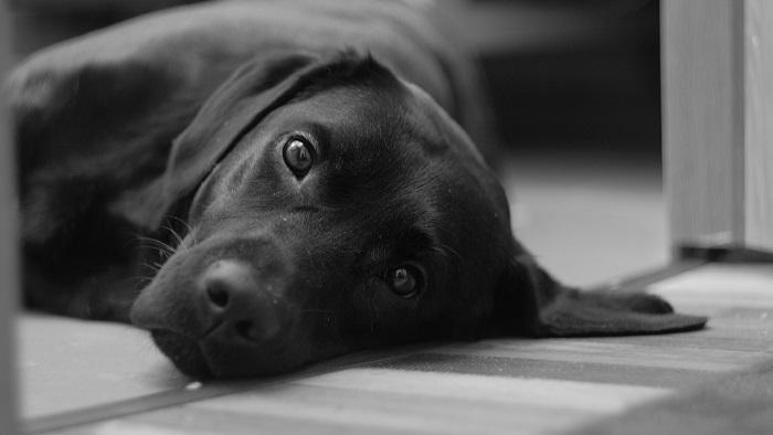 Ngủ mơ thấy chó đen đánh đề con gì?