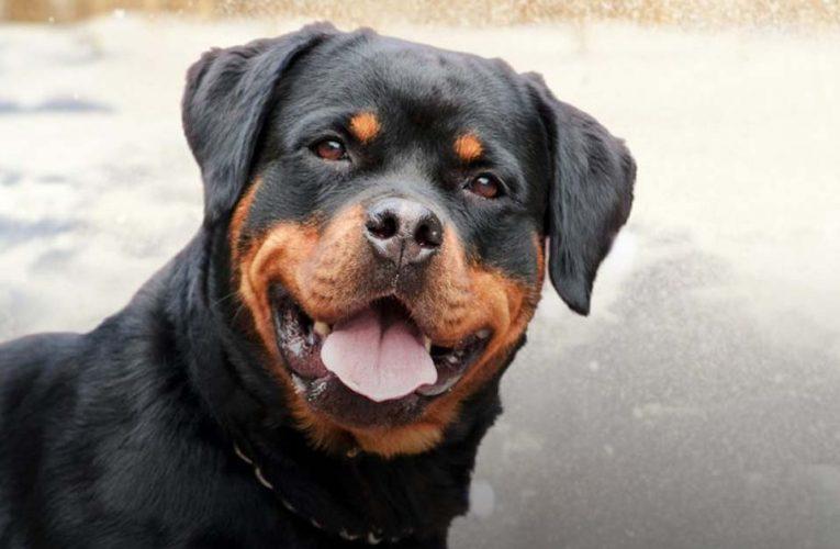 Mơ thấy con chó mù nên đánh lô đề con gì chắc ăn?