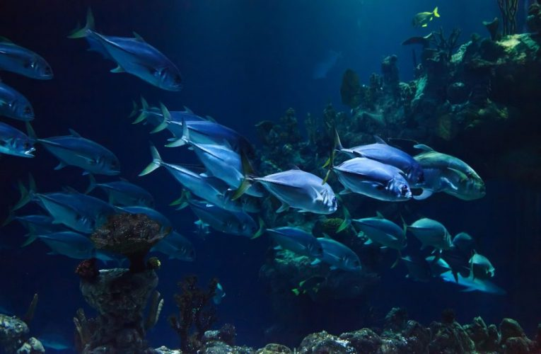 Mơ thấy cá là điềm báo gì? Giải mã giấc mơ thấy con cá