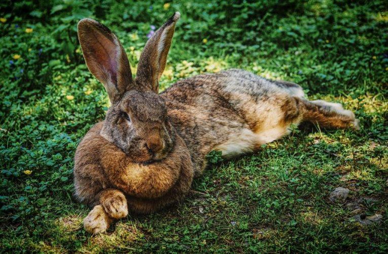 Mơ thấy thỏ là điềm báo gì? Thông điệp từ thỏ con