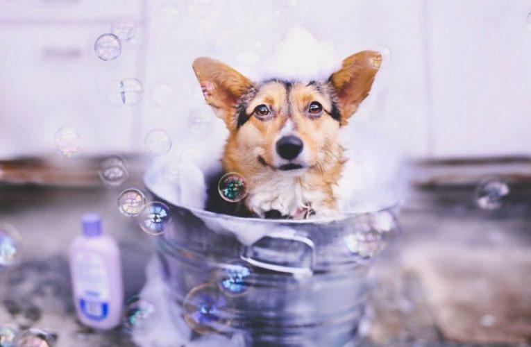 Mơ thấy tắm  cho con chó là điềm báo gì? Nên đánh con gì?