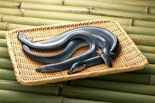 Nằm mơ thấy con lươn đánh đề con gì? Lươn là số mấy?
