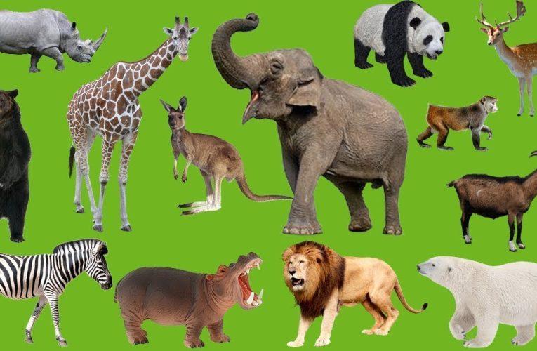 Nằm mơ thấy nhiều con vật có ý nghĩa gì? Điềm báo gì ?