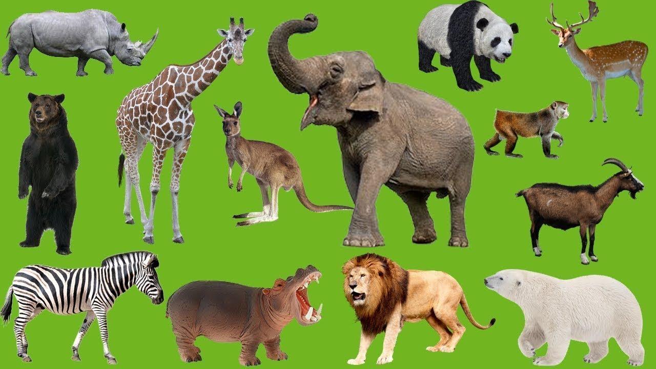 mơ thấy nhiều con vật