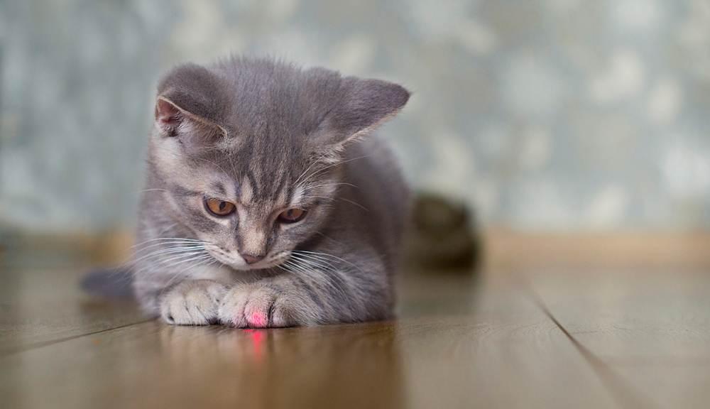 mơ thấy bị mèo đuổi theo